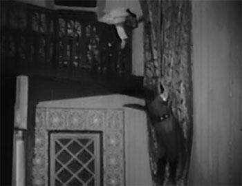 Desert Hawk--curtain slide