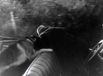 Wolf Dog--car fight