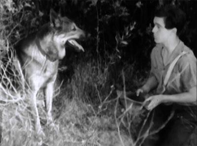 Wolf Dog--Rinty and Darro