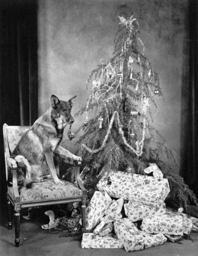 Rin Tin Tin Christmas picture