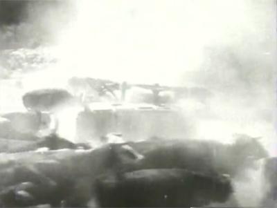 Overland Mail--cattle stampede