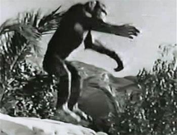 King of the Congo--Chimp Chorus