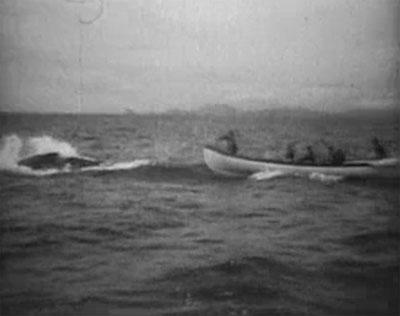 Sea Raiders--whaling shot