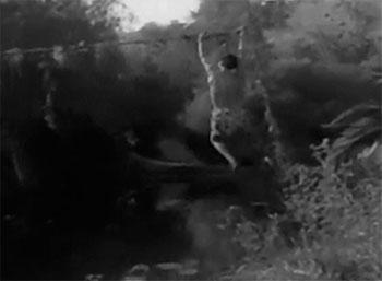 Robinson Crusoe of Clipper Island--vine-climbing