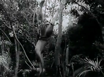 New Adventures of Tarzan--drop from vine